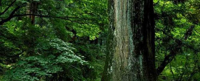 timber_tree-1024x768